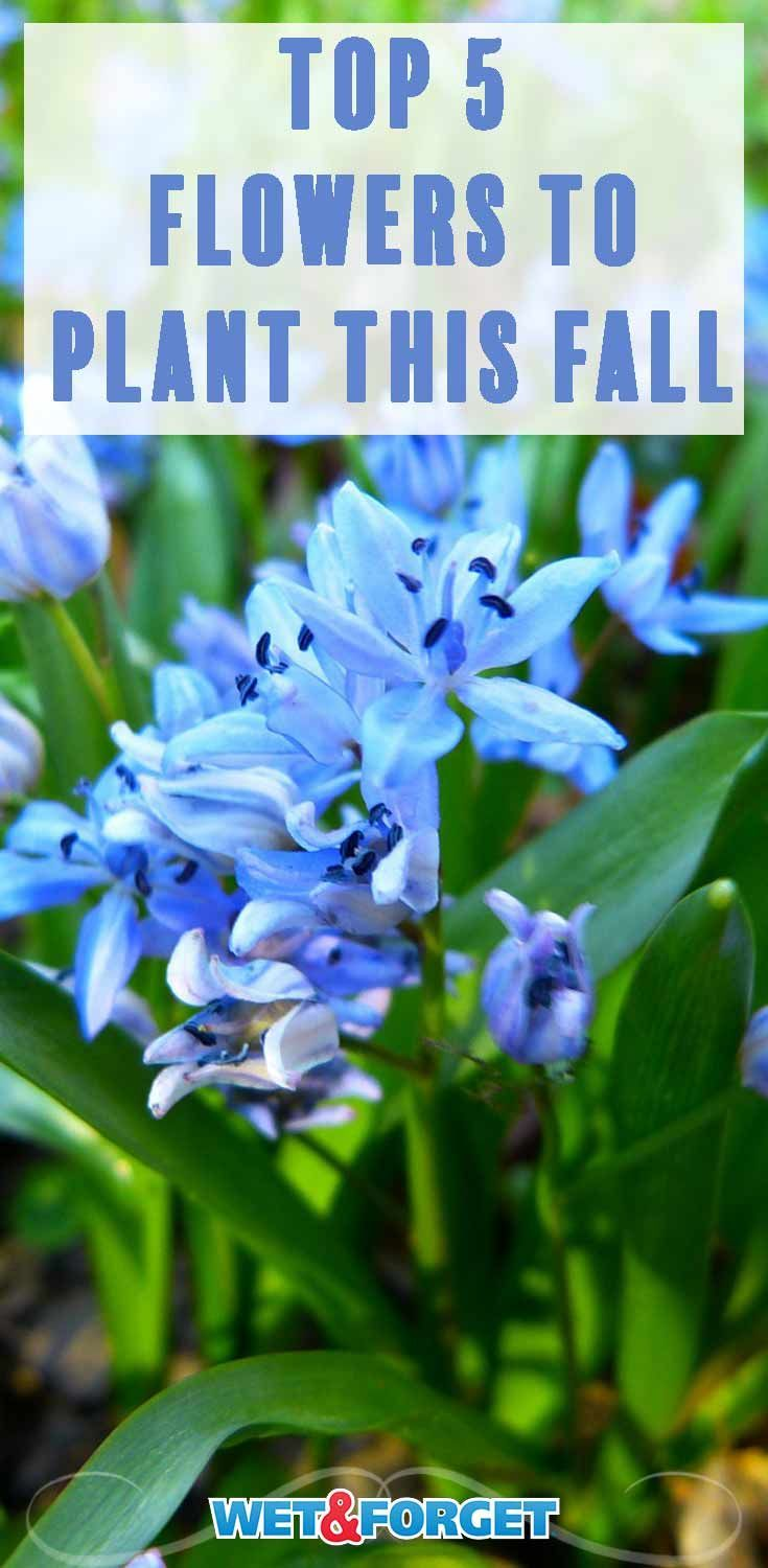 Plant These 5 Flowers In The Fall For A Beautiful Spring Hometalk