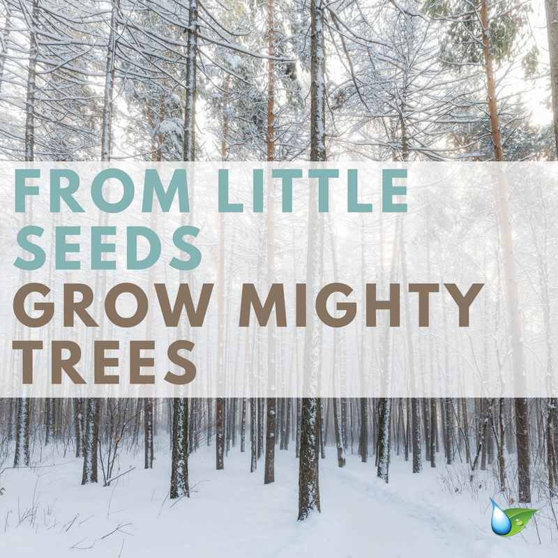 From Little Seeds Grow Mighty Trees Nature Quotes Quotes For