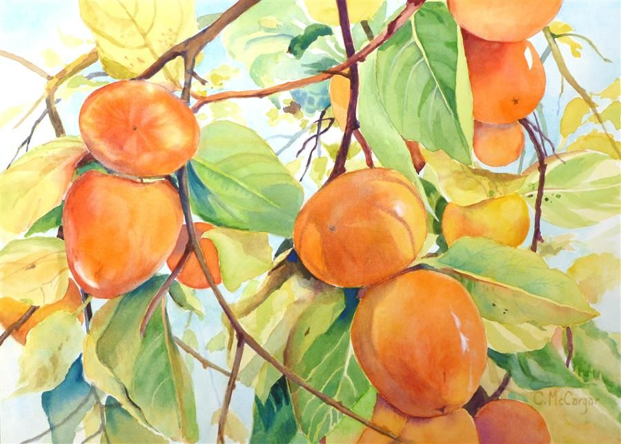 "Original art for sale at UGallery.com | Golden Persimmons by Catherine McCargar | $425 | watercolor painting | 10"" h x 14"" w"