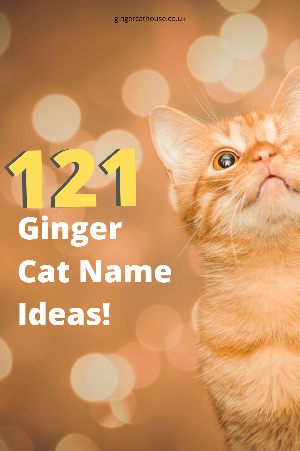 121 Ginger cat names name ideas for orange cats! in 2020