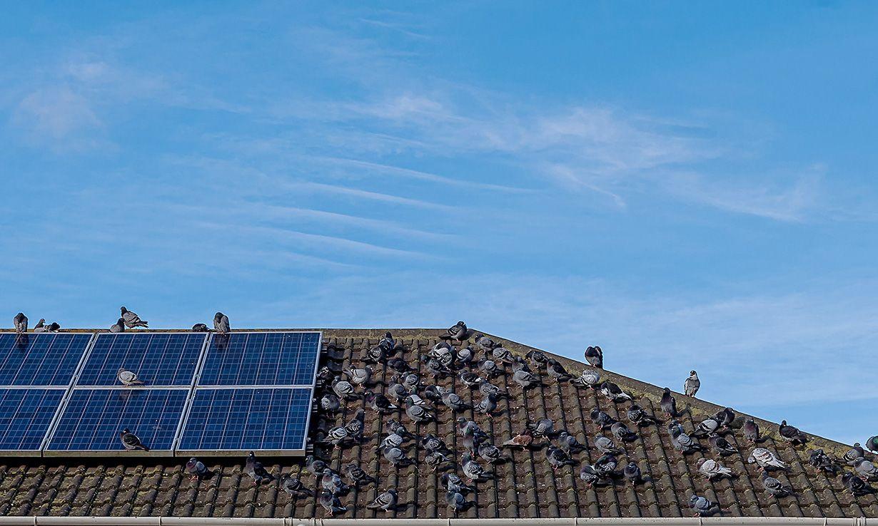 Tata Power Solar In Delhi Renewable Energy Projects Solar Solar Inverter