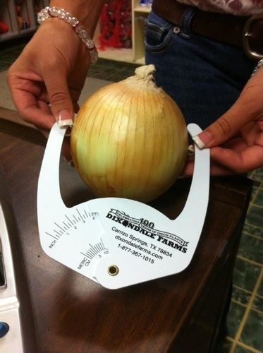 """NGB Garden Products: With this onion caliper tool you can accurately determine the size of your crop. Onions are categorized according to their size. 1"""" to 2"""" Small,2"""" to 3"""" Medium, 3"""" to 3 3/4"""" Large/Jumbo, 3 3/4"""" to 4 1/2"""" Colossal, 4-1/2"""" and up Super Colossal."""