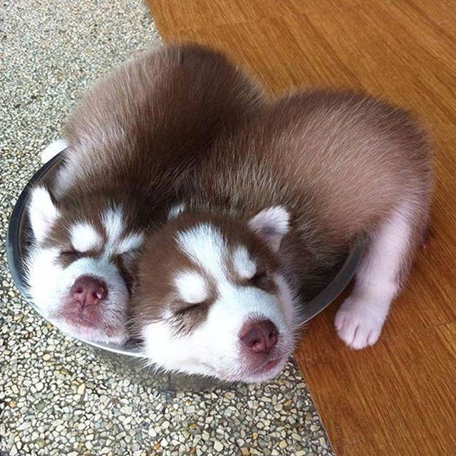 Just Enough Room For The Two Of Us In 2020 Puppies Two By Two