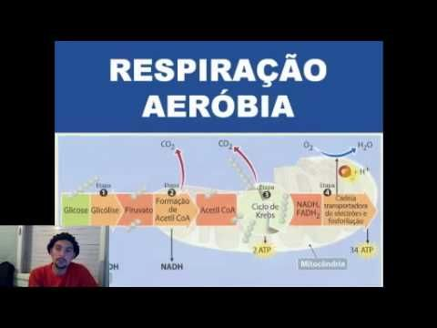 Respiracao Anaerobica E Aerobica Profº Fernando Teixeira Biovestiba Net Respiracao Anaerobica Youtube Respiracao