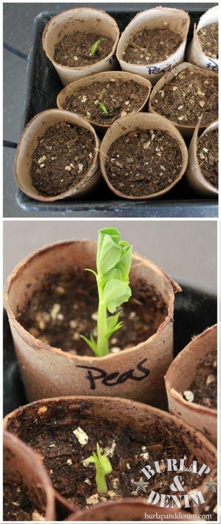 Turn an empty toilet paper roll into a biodegradable seed pot ...