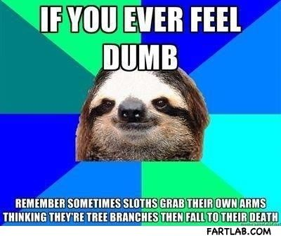 Everytime You Feel Dumb Remember This Funny Picture Pinterest - Every time you feel dumb