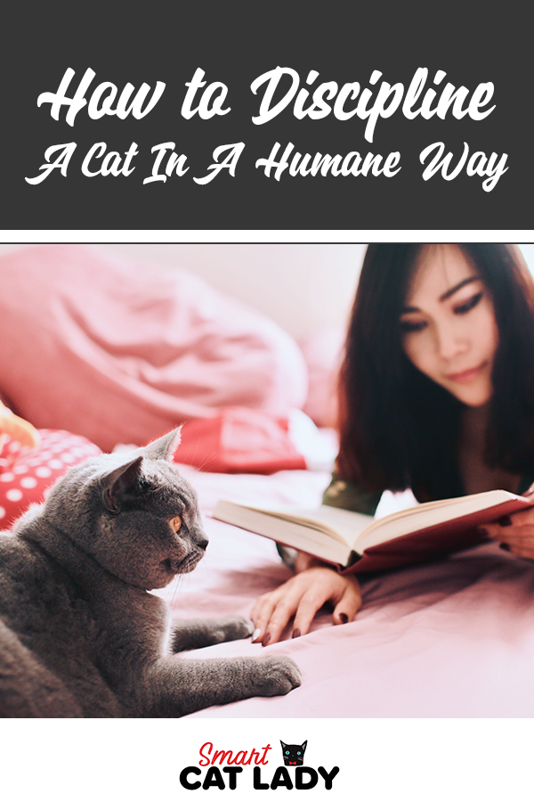 How To Discipline A Cat In A Humane Way In 2020 Pet Care Cats Kitten Care Cat Care Tips