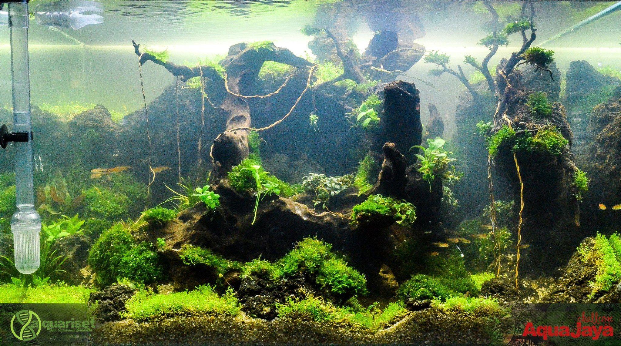 Pin by Stephanus Mardianto on Aquascape | Aquarium, Fish ...