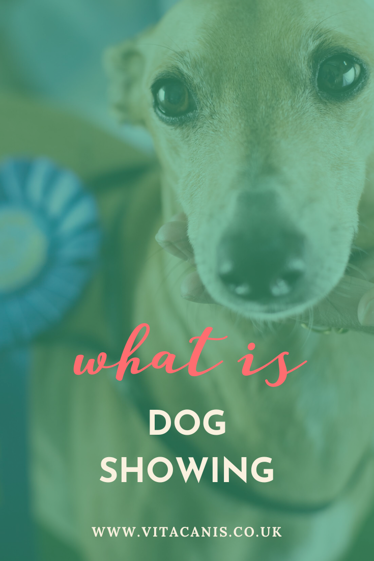 Keep Calm and Keep Showing in 2020 Calm dog breeds, Dog