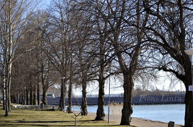 Pieni Lintu: Our hometown, Vaasa