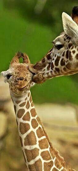 Kissesss