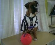Ulisse - Boxer life