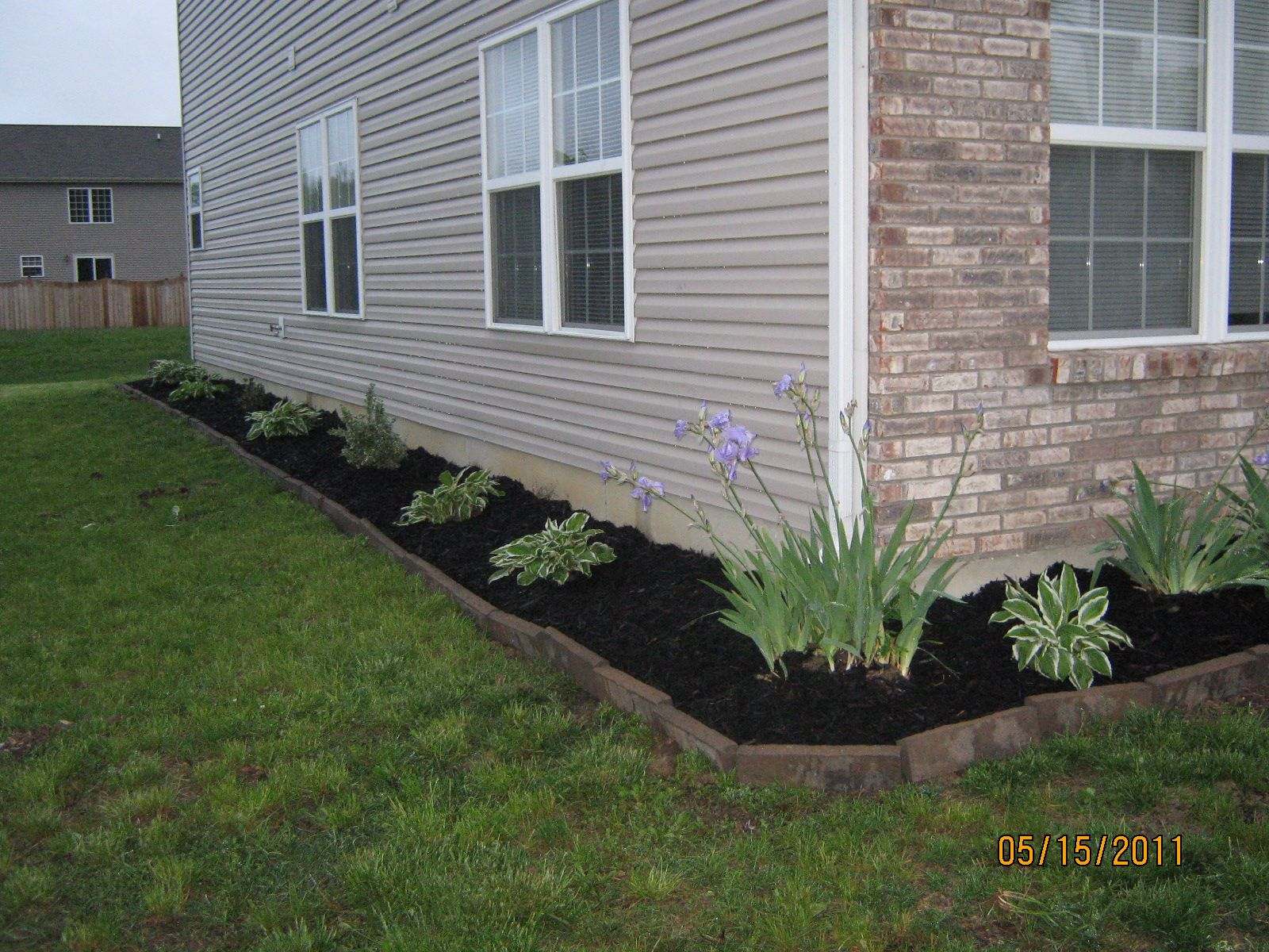 Black mulch landscaping we used rectangular pavers along for House landscape
