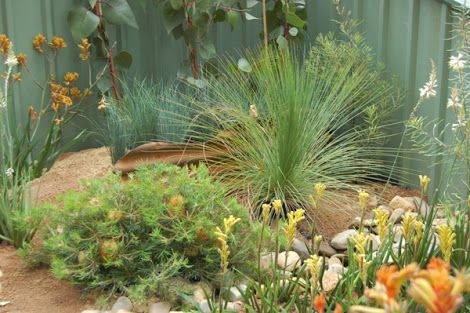 Native Australian Garden Design Ideas