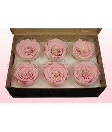 Geconserveerde rozen LichtRoze-Wit L Doos6