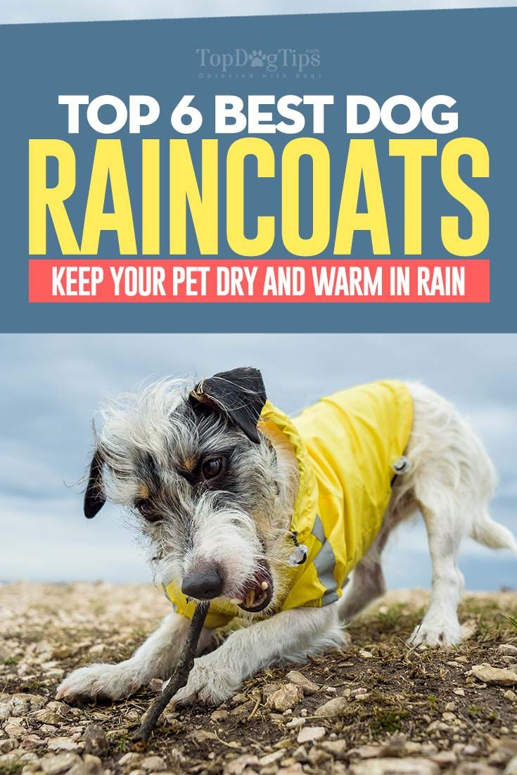 35+ Best Doggy Raincoats to Keep Your Pet Dry and Warm in