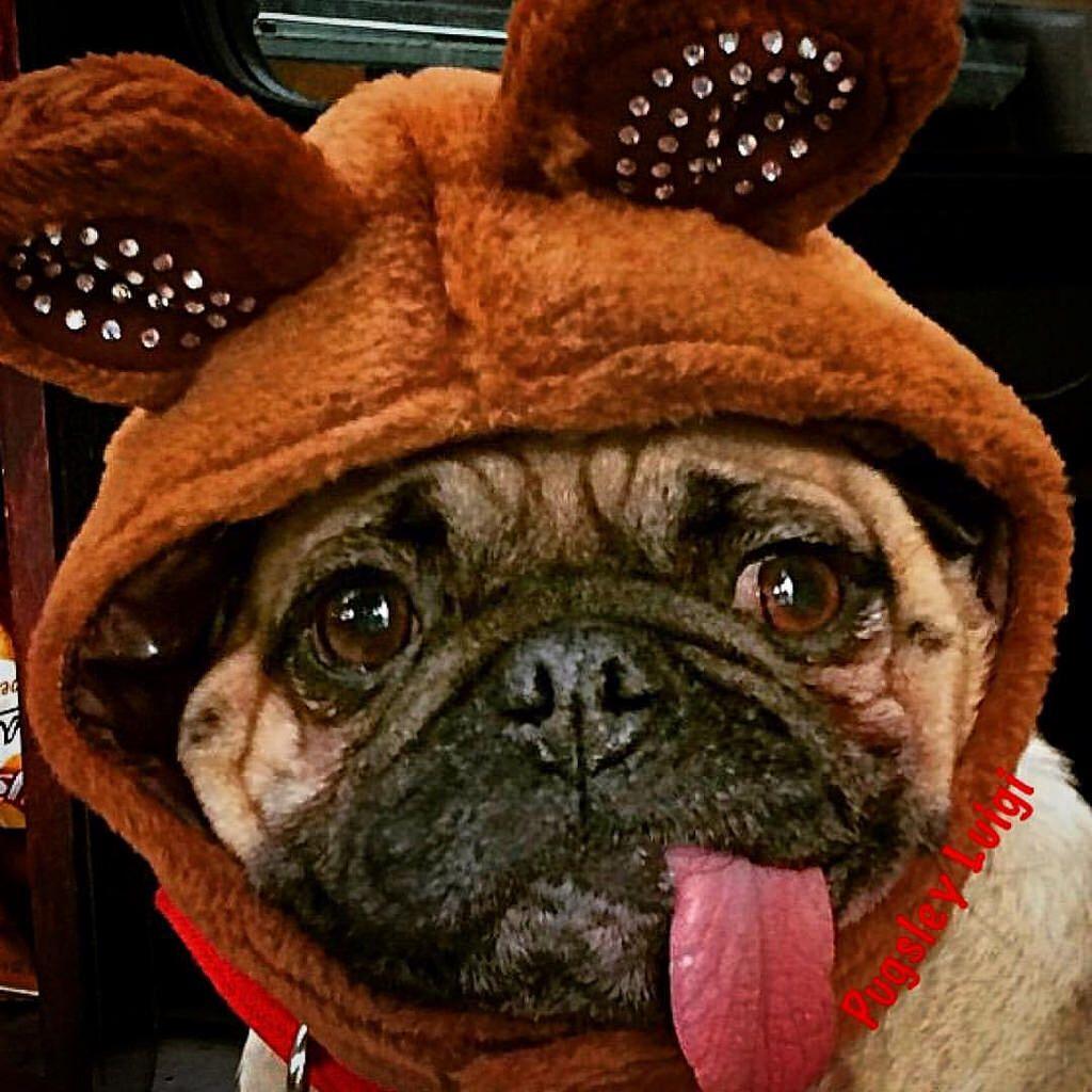 Sometimes I Think Ims An Ewok Pugsley Luigi Ewok Teddybear