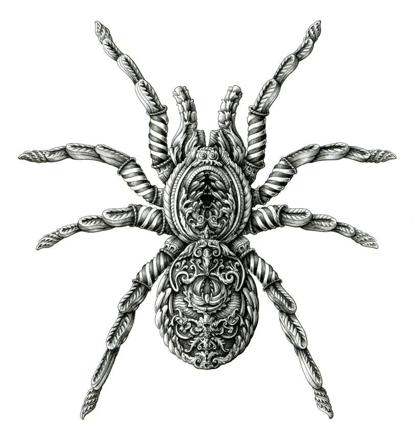 Tarantula © Alex Konahin | Sólo para biólogas | Pinterest | Ideas ...