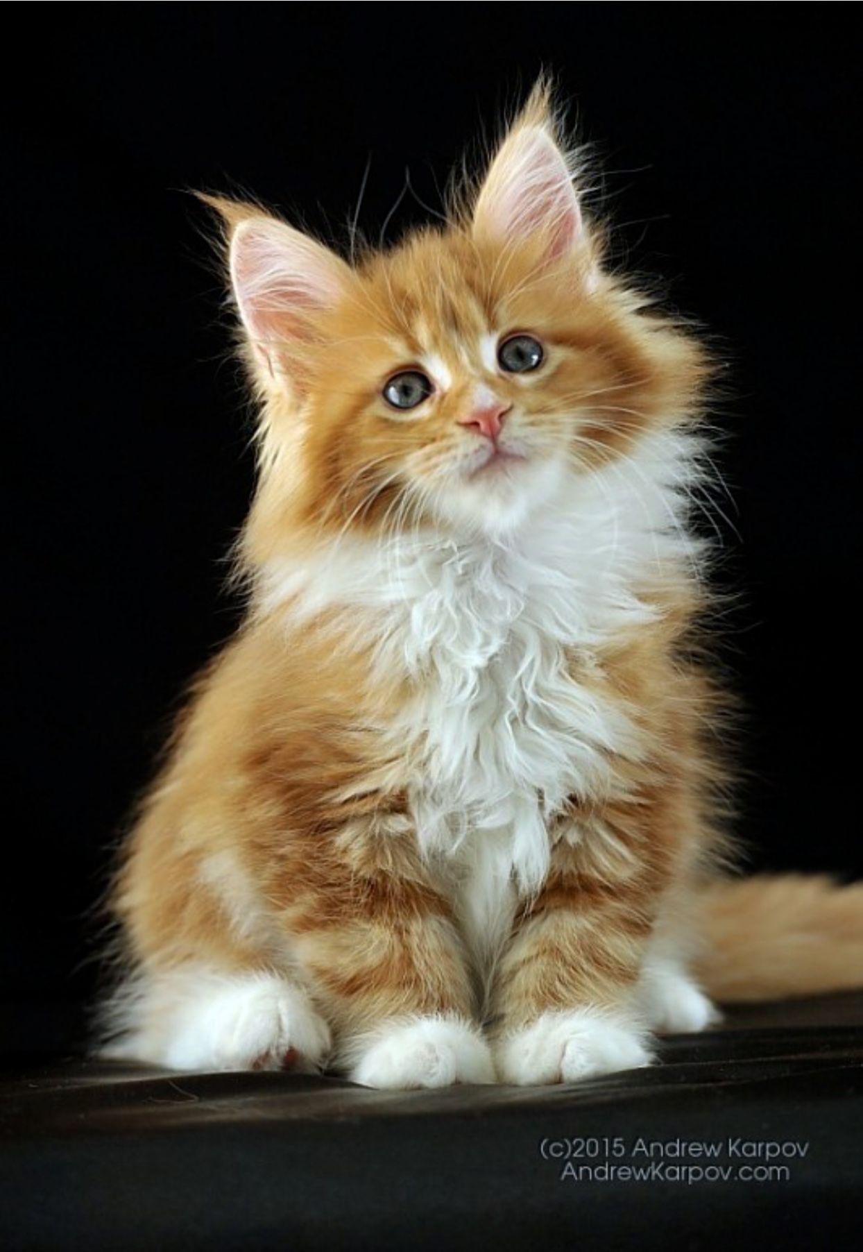 Ira Andrew Cute Cats Pretty Cats Beautiful Cats