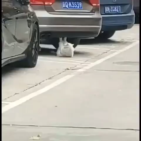 Best Funny Cute Cat workout  ️♀️ with car Cat ABS build, How about you today?   #lovely #lovelycats #cute #cutecats #pets #pet #cats #cat #catsanddogs #love #funny #funnyvideos 6