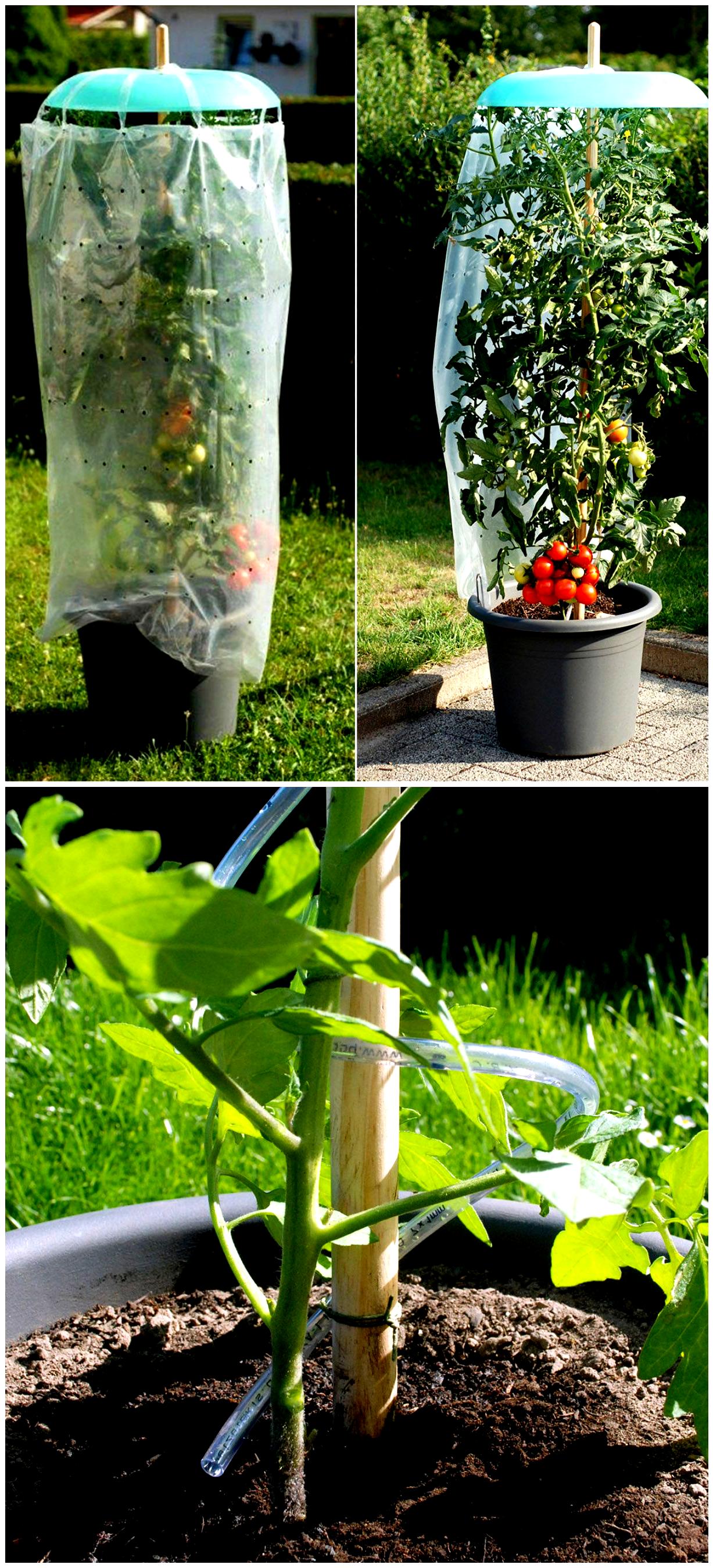 Eine Tolle Idee Seine Tomatenpflanzen Vor Regen Zu Schutzen Das 3 Teilige Tomatenhut Starter Set Gefunden Auf Www Tom Garten D In 2020 Tom Garten Pflanzen Garten