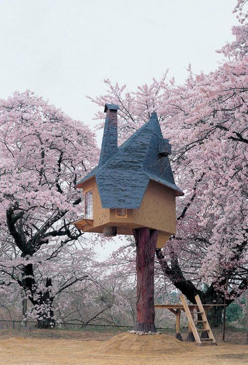 Tree House Tree House Cool Tree Houses Floating Architecture