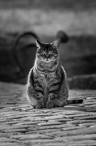 Cat - http://www.1pic4u.com/blog/2014/10/02/cat-62/