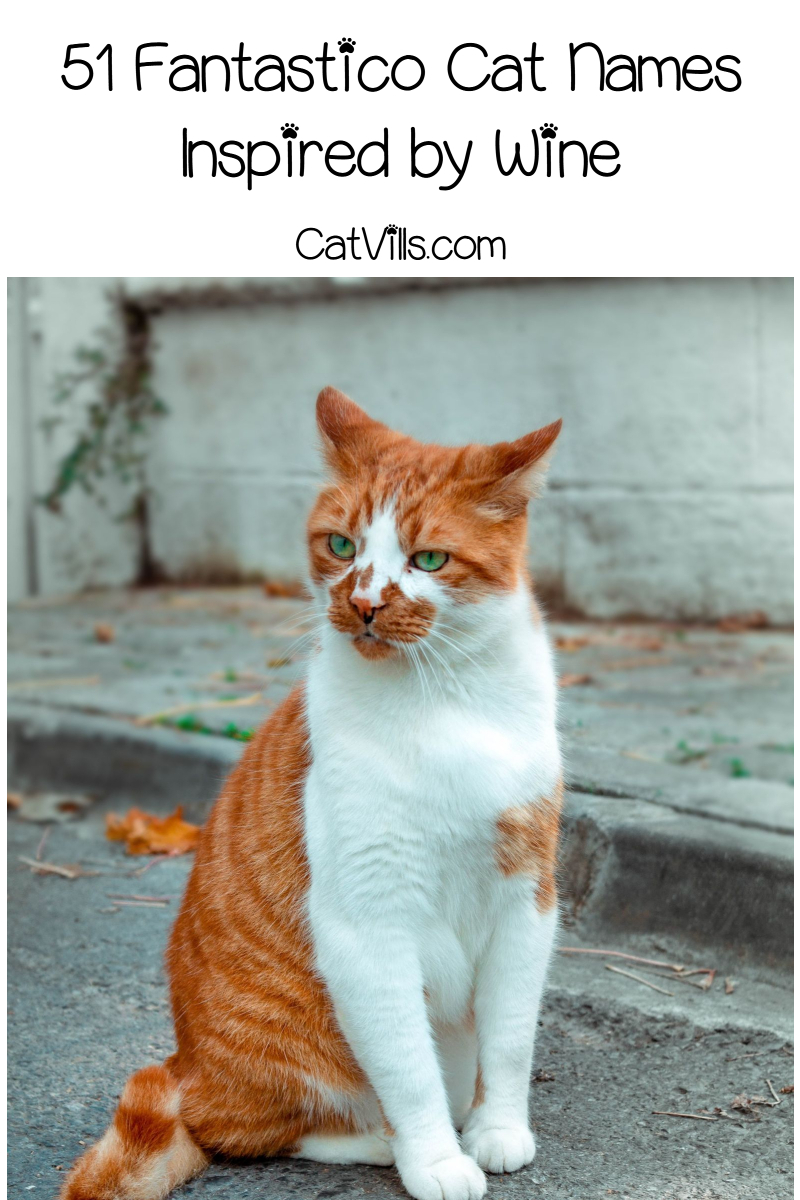 Looking For Some Purr Fetto Italian Food Names For Cats How About Some Wine Inspired Cat Names We Ve Got You Covere Italian Food Names Cat Names Food Names