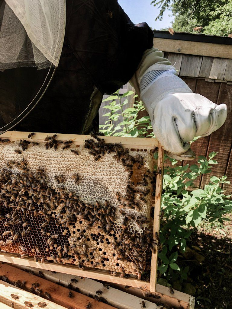 Backyard Beekeeping for Beginners in 2020