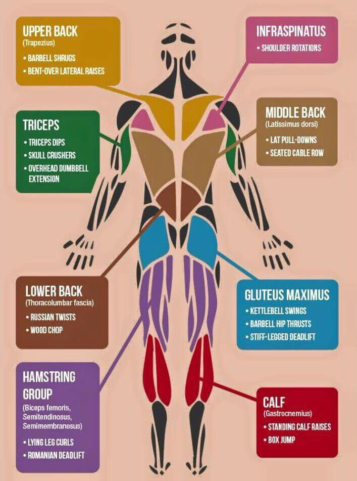 Best exercises for each body part of health and