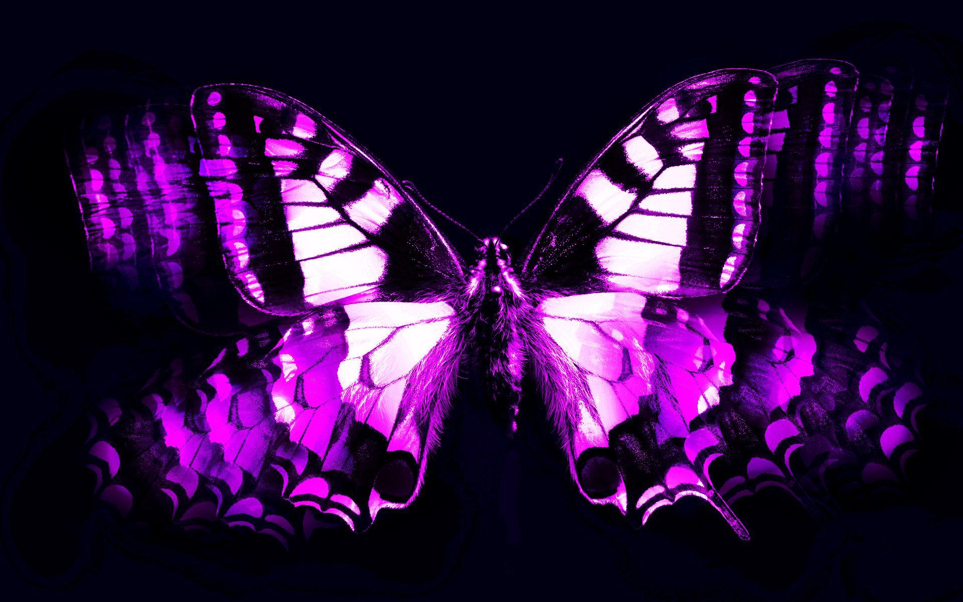 Animated Beautiful Purple Butterflies