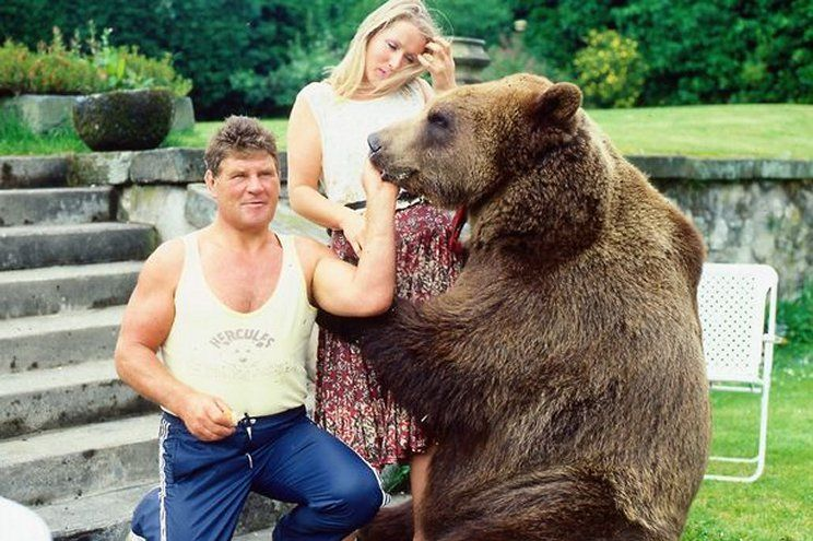 Hercules the 'Millionaire Bear'