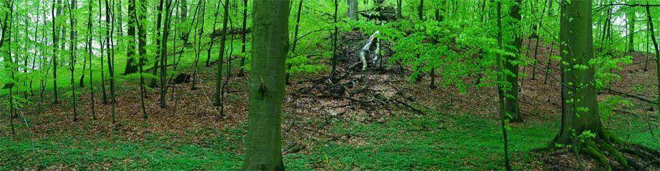 Fototapete schön grün (Nr. 5583)  www.berlintapete.de