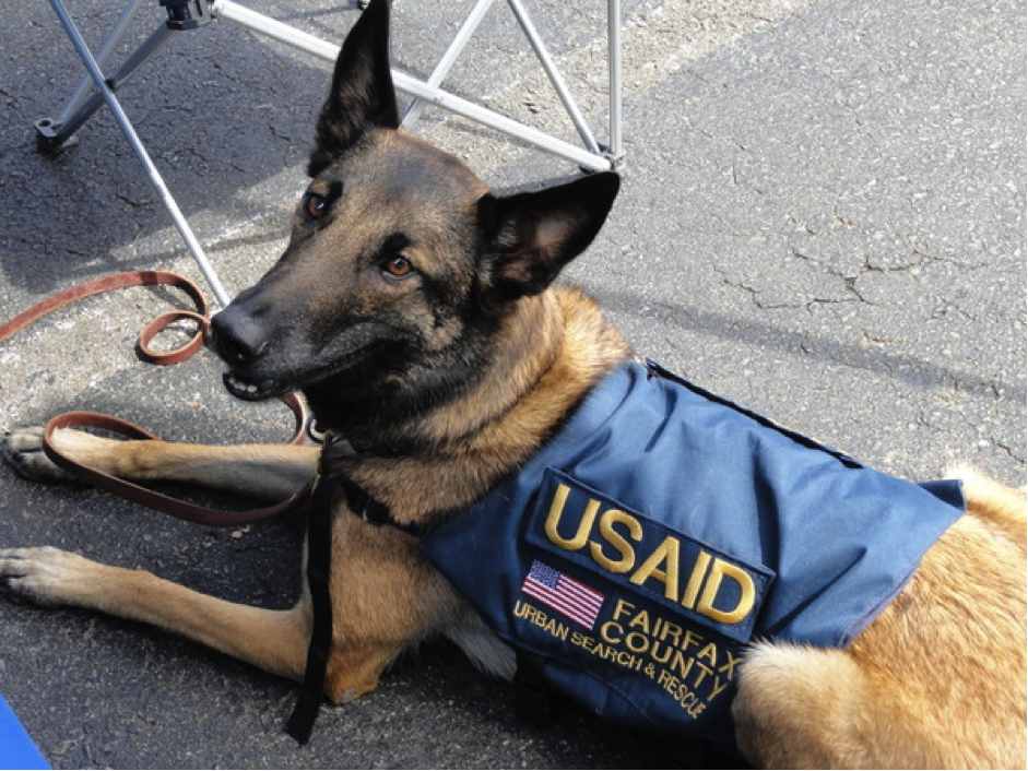 Nationwide Dog Wash Raises 21 000 For Service Dogs Military Service Dogs Service Dogs Military Dogs