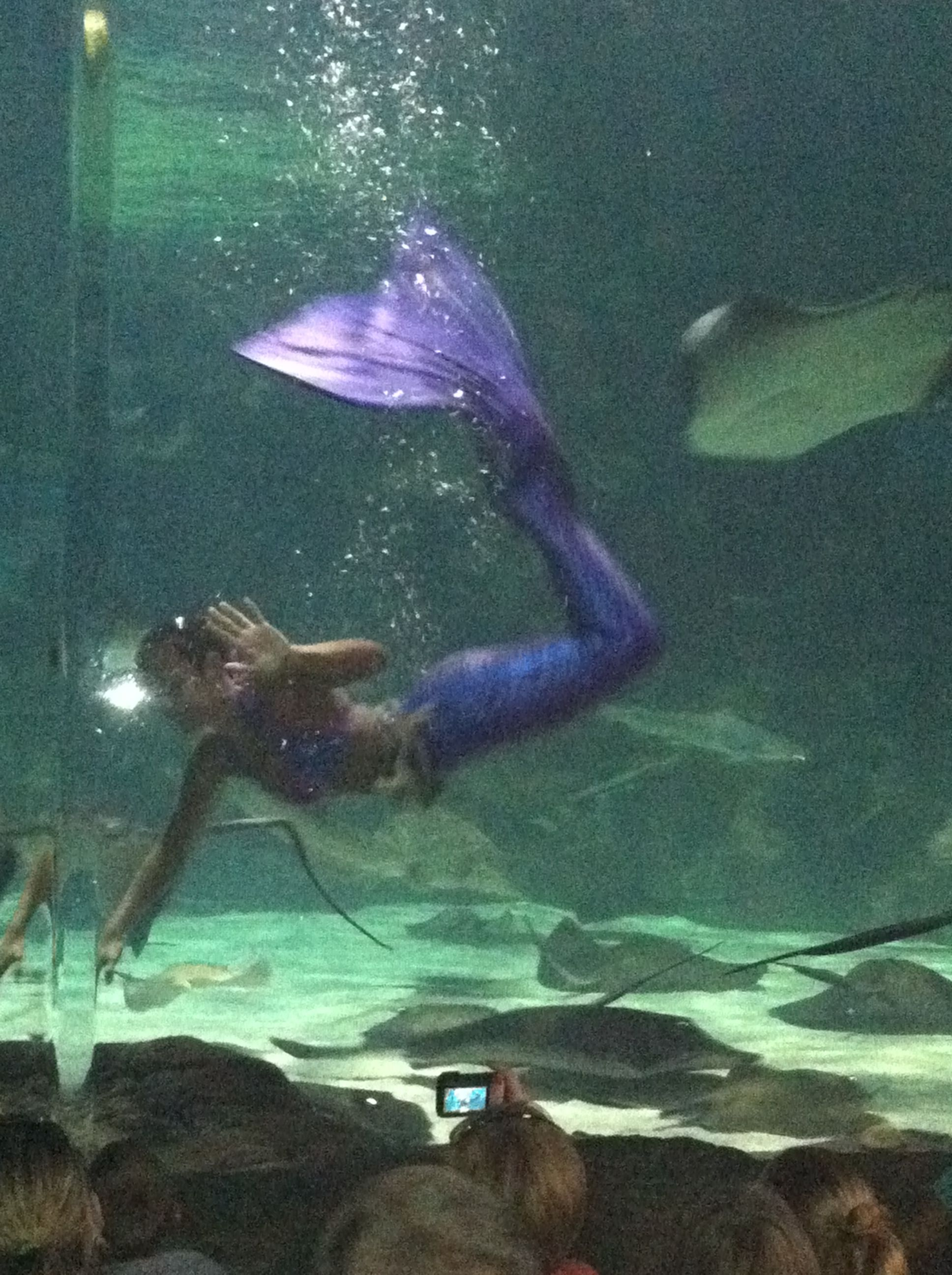 Ripleys Aquarium At Myrtle Beach Sc Mermaid Show
