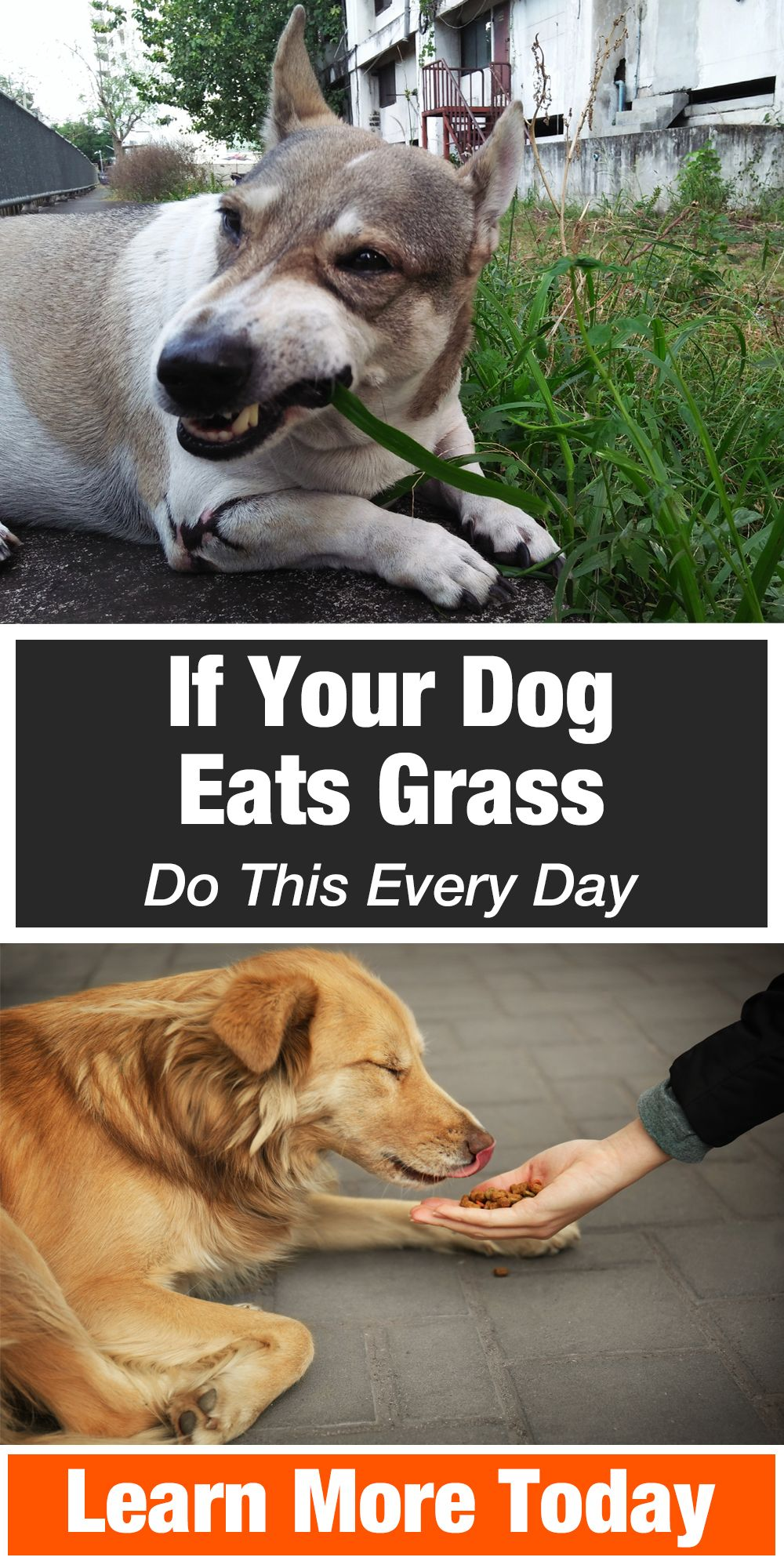 If Your Dog Eats Grass Do This Every Day Dogs Your Dog Dog Eating