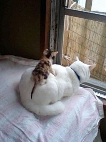 """""""I got your back...."""""""