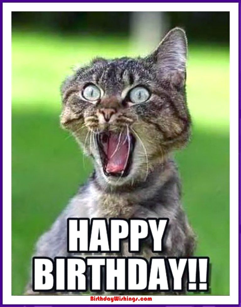 Funny Happy Birthday Memes With Cats Dogs Funny Animals Funny