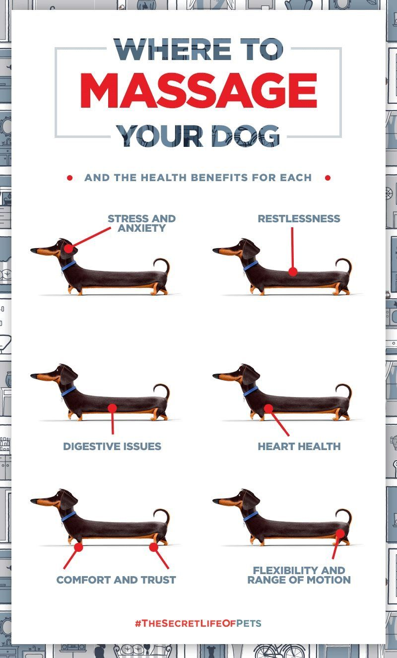 Where To Massage Your Dog For Most Needs Dog Care Dogs Pet Hacks