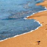Novacasaplus dispone a la venta de un Chalet Unifamiliar a 200m de la playa de Canet de Berenguer. Situada en la playa LA ALMARDÁ. Sagunto. Valencia