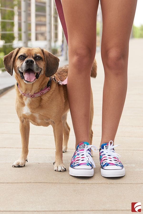 5c6a2817e196 Canines + Converse   the perfect pair
