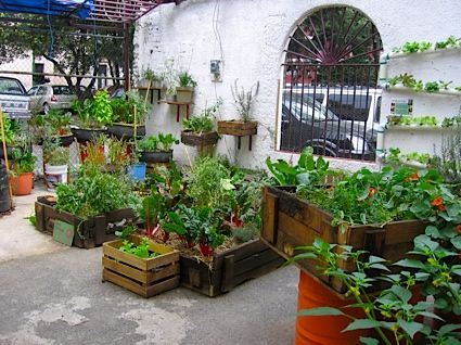 Organoponics an urban agriculture technique that reuses organic
