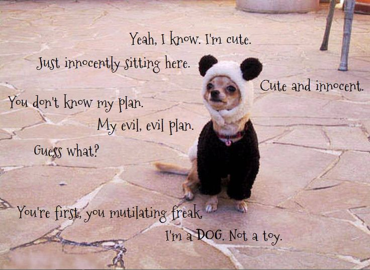 I Love My Dog Quotes Endearing Quotesvana  Quotes About Dogs & Puppies  Funny Dog  Pinterest