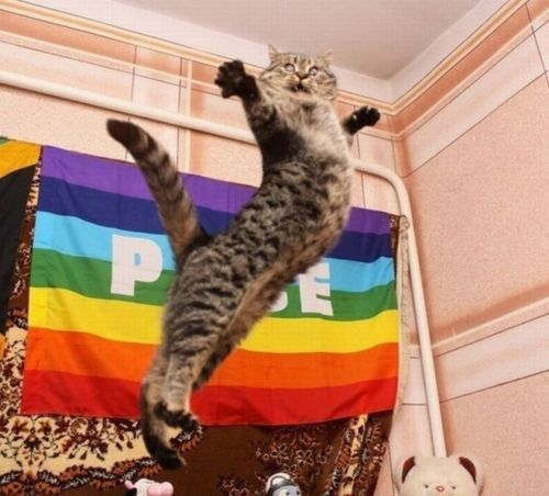 Eat Your Heart Out Nureyev Funny Cats Cats Cat Memes