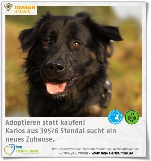 Karlos Ist Im Tierheim Stendal Nun Schon In Seinem Dritten Zuhause Tierheim Zuhause Und Neues Zuhause