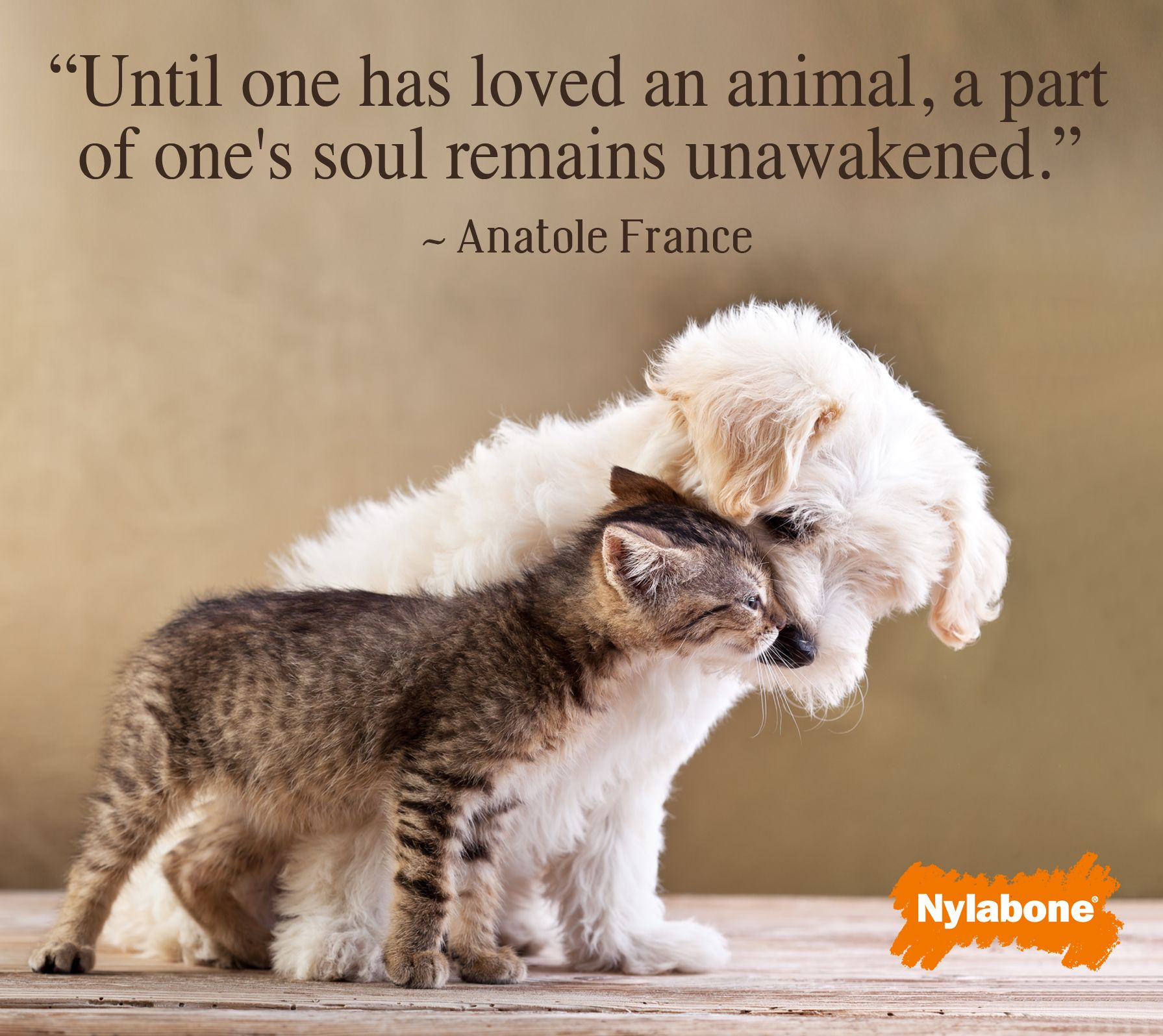 Pets bring unconditional love Adorable AnimalsDog QuotesAnimal