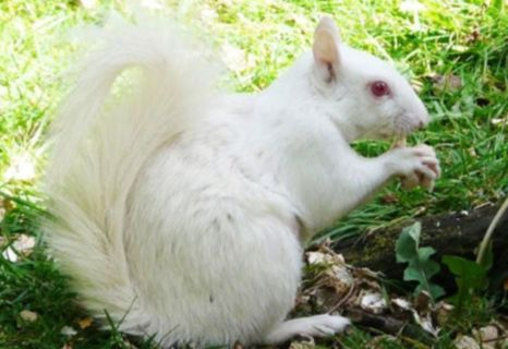 Albino turtles – what next? Our top 5 albino animals, of course! #albinoanimals