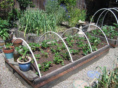 Uncle Tom\'s Garden: How to keep chickens out of your garden beds ...