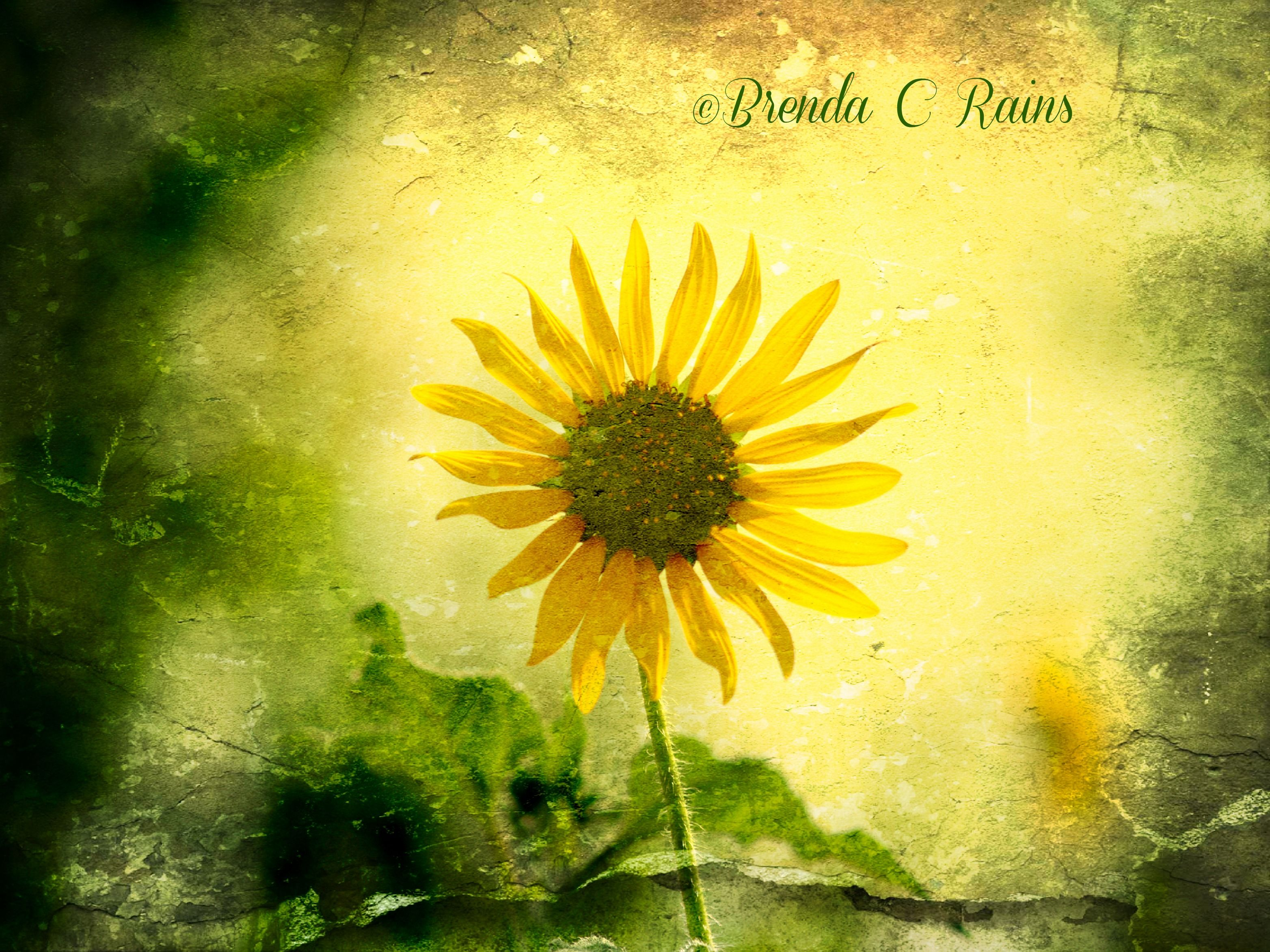 Smudged Sunflower