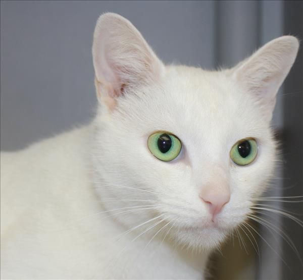 Meet Casper the friendly cat! He's been in our care for